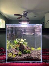 Shrimp Tank Week 2 (1).jpg