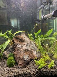 Shrimp Tank Week 2 (3).jpg