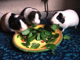 Toffee, Fudge and Marshmallow Steve Joul 10.02.13.JPG