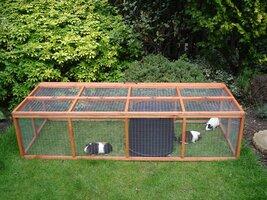 Guinea Pigs and run Steve Joul 16.08.08 - Copy.jpg