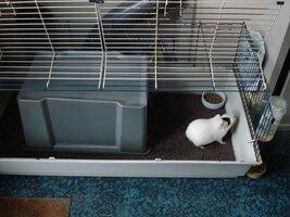 16.01.24 House in Guinea Pig Cage Steve Joul (4).JPG