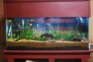 55 gallon aquarium 8-5-20.jpg