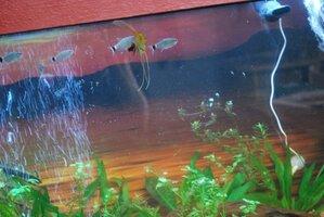 My Fish 8-5-20.jpg