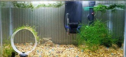 croppedMy guppy aquarium Oct. 2020.jpg