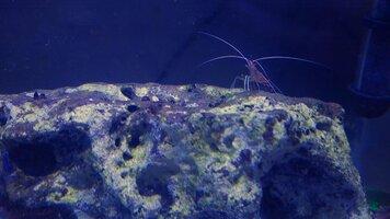 Shrimp 12-7.jpg
