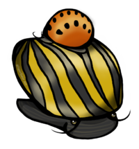 Nerite1.png