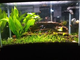 Fish Tank March 2021.jpg