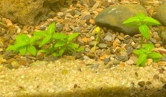 unknown plant.jpg