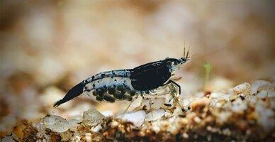 20210813_shrimp~2.jpg