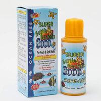 8000-bactle-bacteria.jpg