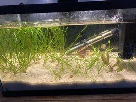 Planted tank 9 21 2021.jpeg