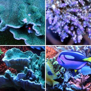 May 2013 Fish and Corals