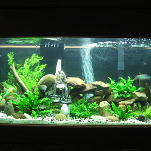 75gal Freshwater Community Fully planted