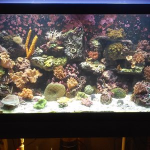 75g Mixed Reef