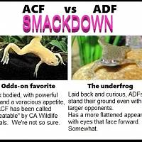 ADF/ACF Smackdown