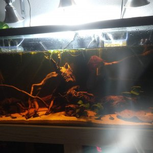 Casa de Corydoras - 2020 July - full view