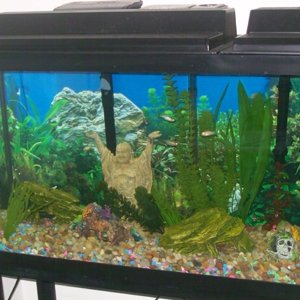 55 Gallon Tropical Community 2 07 27 09