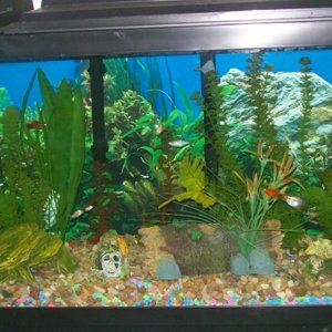 55 Gallon Tropical Community 3 07 27 09