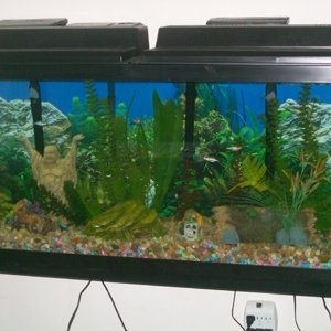 55 Gallon Tropical Community 07 27 09