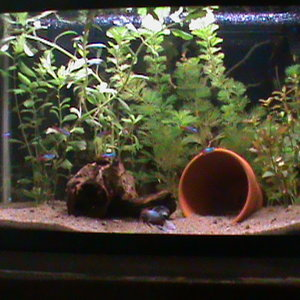 10g stock lighting/hood from Aqueon kit. Plants are left to right, Wisteria,Primrose,Cambomba, and Red Ludwigia to the far right of the terra cotta po