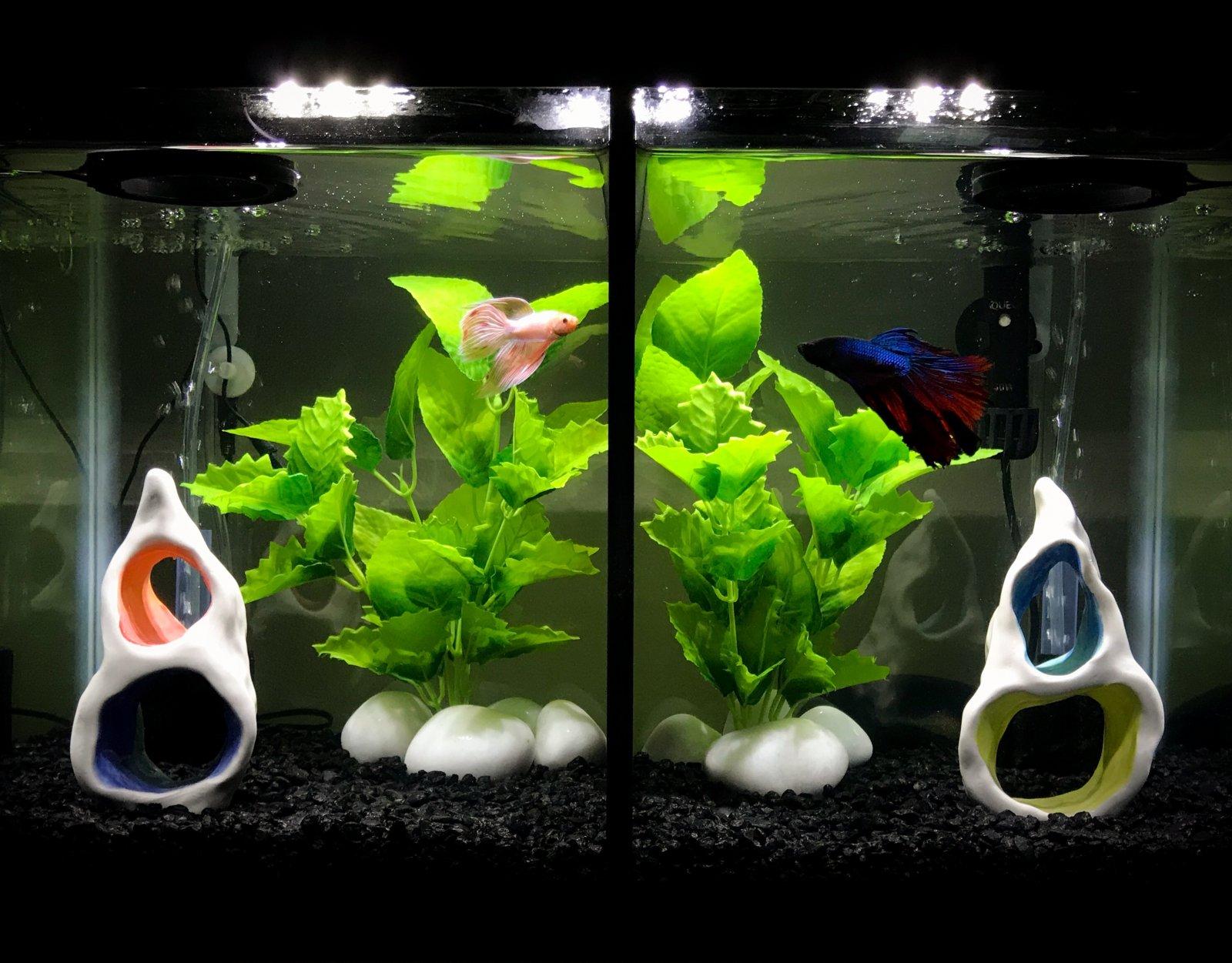 New Plants Divided 10 Gallon Betta Aquarium Aquarium Aquascaping Forum 392647