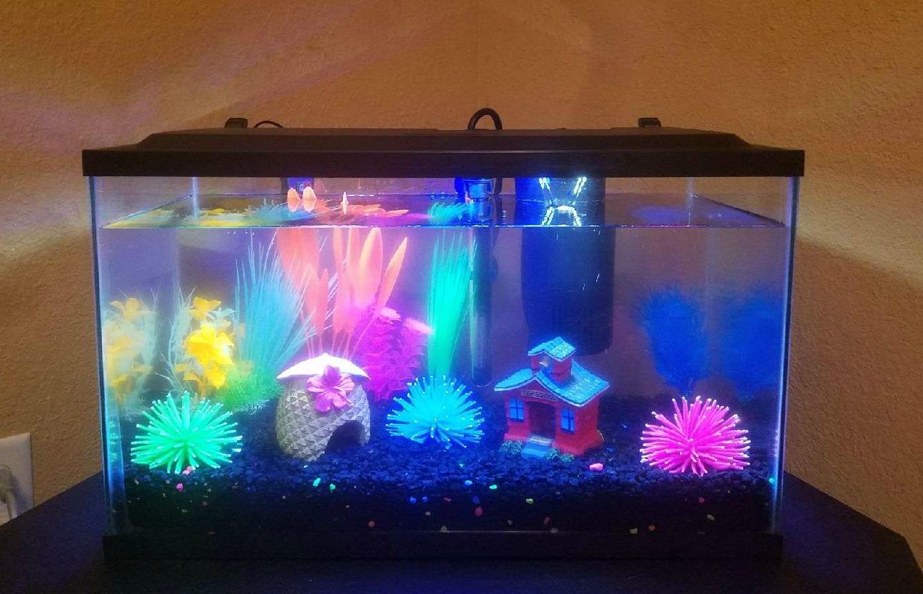 10 gallon glofish tank build | freshwater aquarium builds 332910
