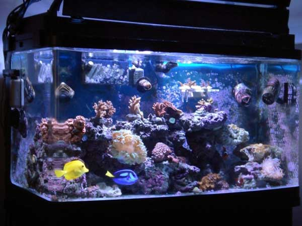 Member spotlight agsansoo for Marine fish tanks