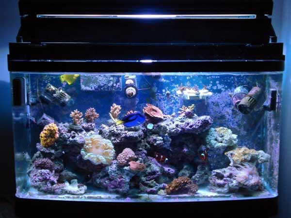 Member spotlight agsansoo for Small saltwater fish tank