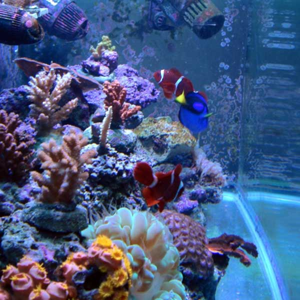 Saltwater+Aquarium+Fish Saltwater Aquarium Fish Magazine Aquatic ...