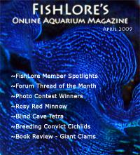 Aquarium Fish Magazine - April 2009