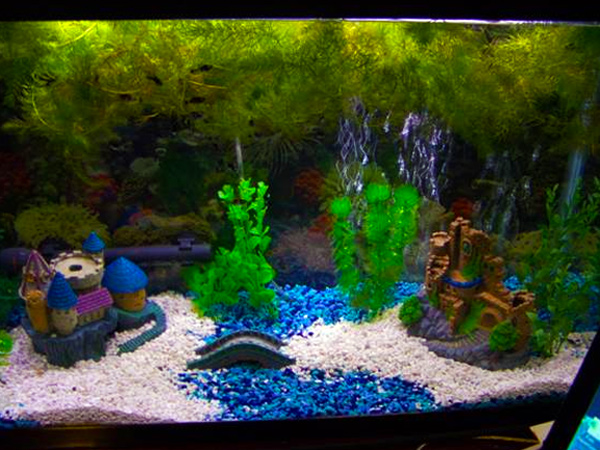 Member spotlight bowcrazy for 55 gallon aquarium decoration ideas
