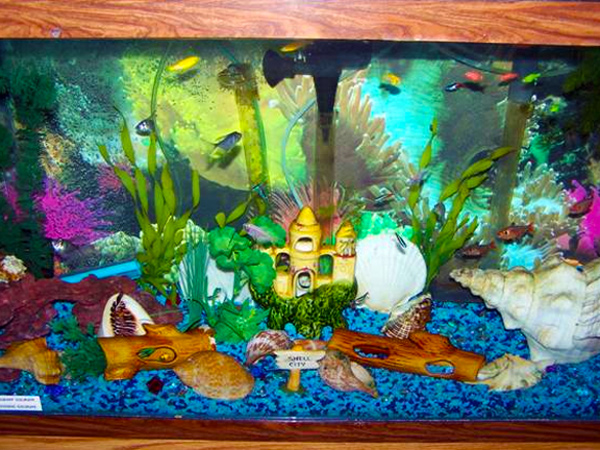 55 gallon fish tank decoration ideas 2017 fish tank for Aquarium decoration set