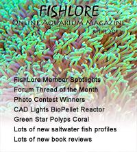 Fish and Aquarium Magazine - April 2012