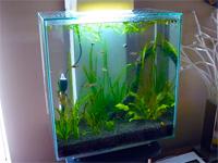 12 Gallon Edge Aquarium