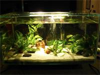 6 Gallon Edge Aquarium