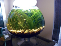 1.75 Gallon Fish Bowl