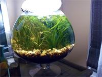 1.75 Gallon Fish Bowl