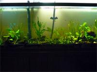 Assorted Fish Tank
