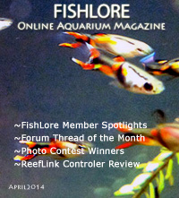 Aquarium Fish Magazine - April 2014