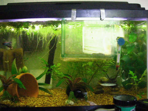 Member spotlight andy65 for 10 gallon fish tank heater