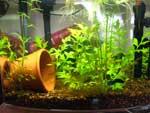 6 gallon eclipse aquarium