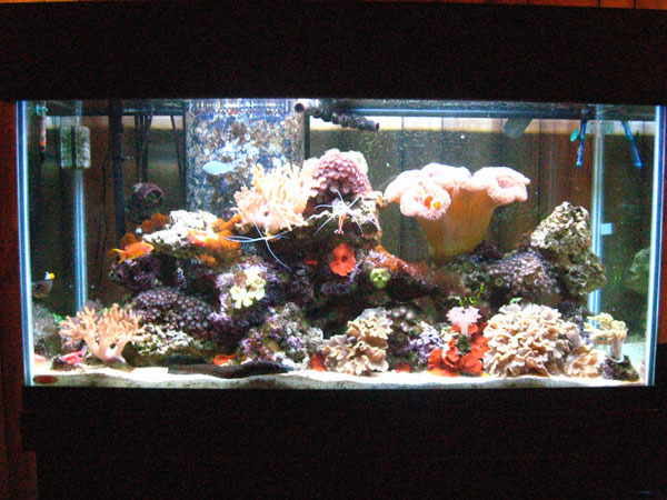 Member spotlight andy65 for Saltwater fish tanks for beginners