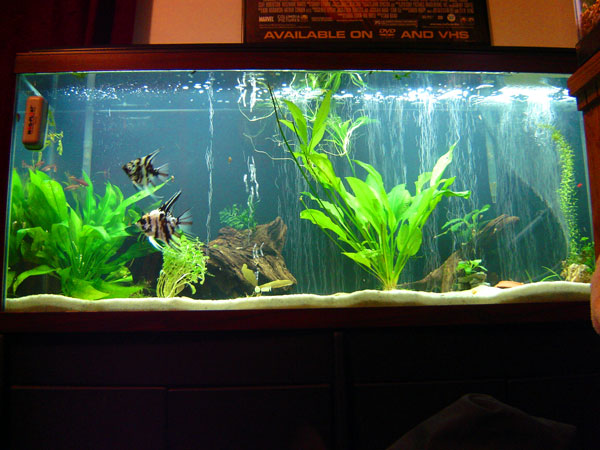 55 gallon fish tank setup ideas current aquarium setups for 55 gallon fish tank for sale