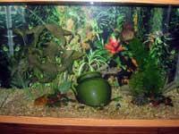 Discus Tank