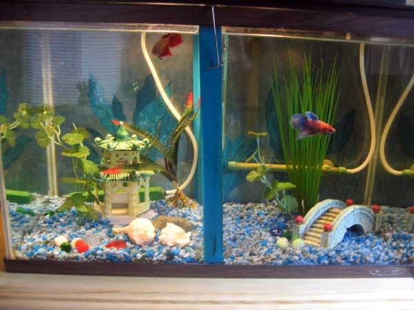 Member spotlight kate capekate for 10 gallon fish tank cover