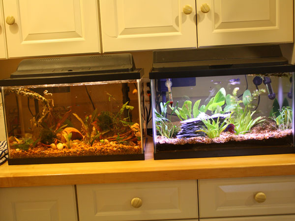 Member Spotlight - Beth1965 10 Gallon Home Aquariums