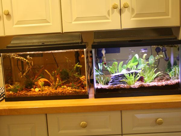 Member spotlight beth1965 for 10 gallon fish tank dimensions