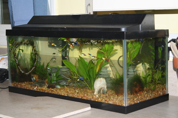 20 gallon fish tank set up 20 gallon fish tank set up for How many fish in a 20 gallon tank