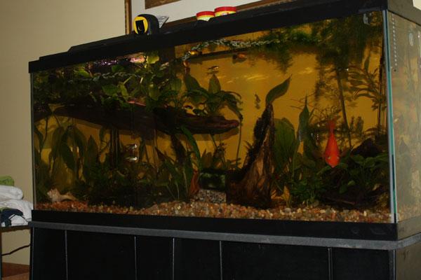 Member spotlight beth1965 for 55 gal fish tank