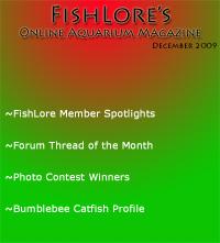 Aquarium Fish Magazine - December 2009